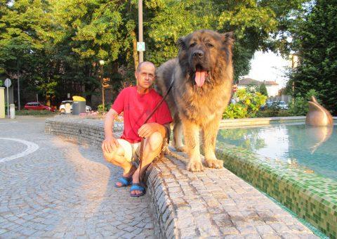 Titán Campeón del Pastor Caucásico con su dueño