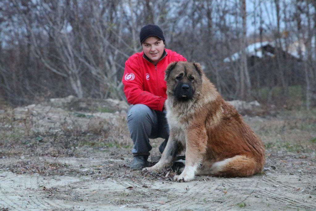 Día de San Valentín con el perro